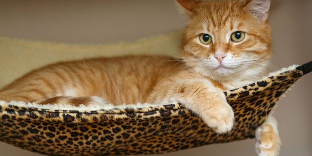 5 Ways to Keep Your Cat Happy and Healthy