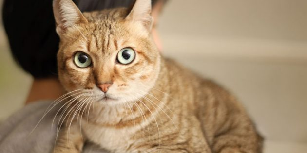 Why cats are attracted to the feline-averse