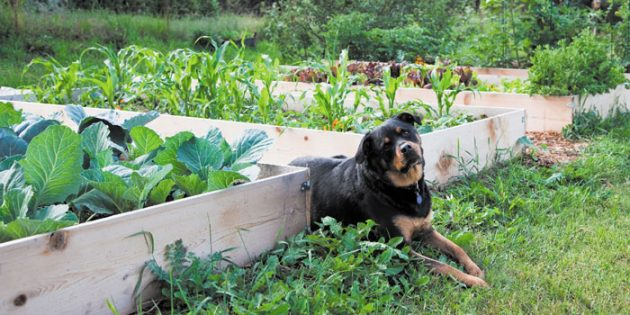 PUPS AND PLANTS