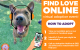 "Pets Look to ""Find Love Online"" with Virtual Adoption Event"