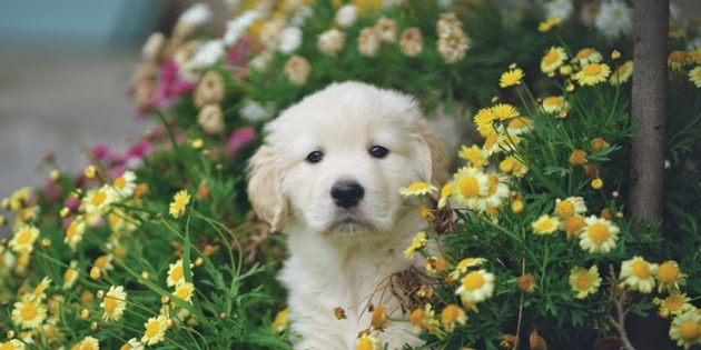 Keeping Pets Safe in the Garden