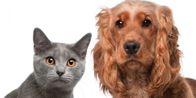 Fuzzy math? What's behind pet stats?